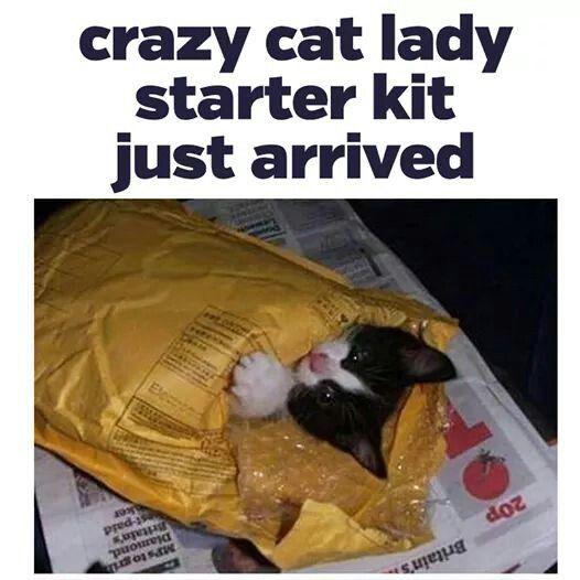 Lol cat lady