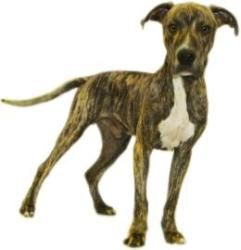 Adopt BUGS on #plotthound