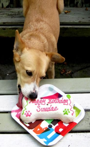 14 Precious Pictures Of Dogs Eating Dog Friendly Cakes Dog