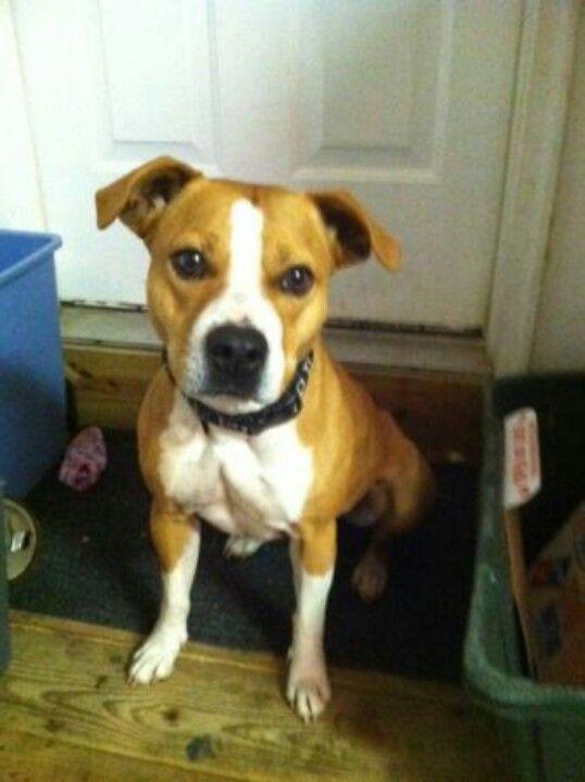 Craigslist Nj Pets For Adoption