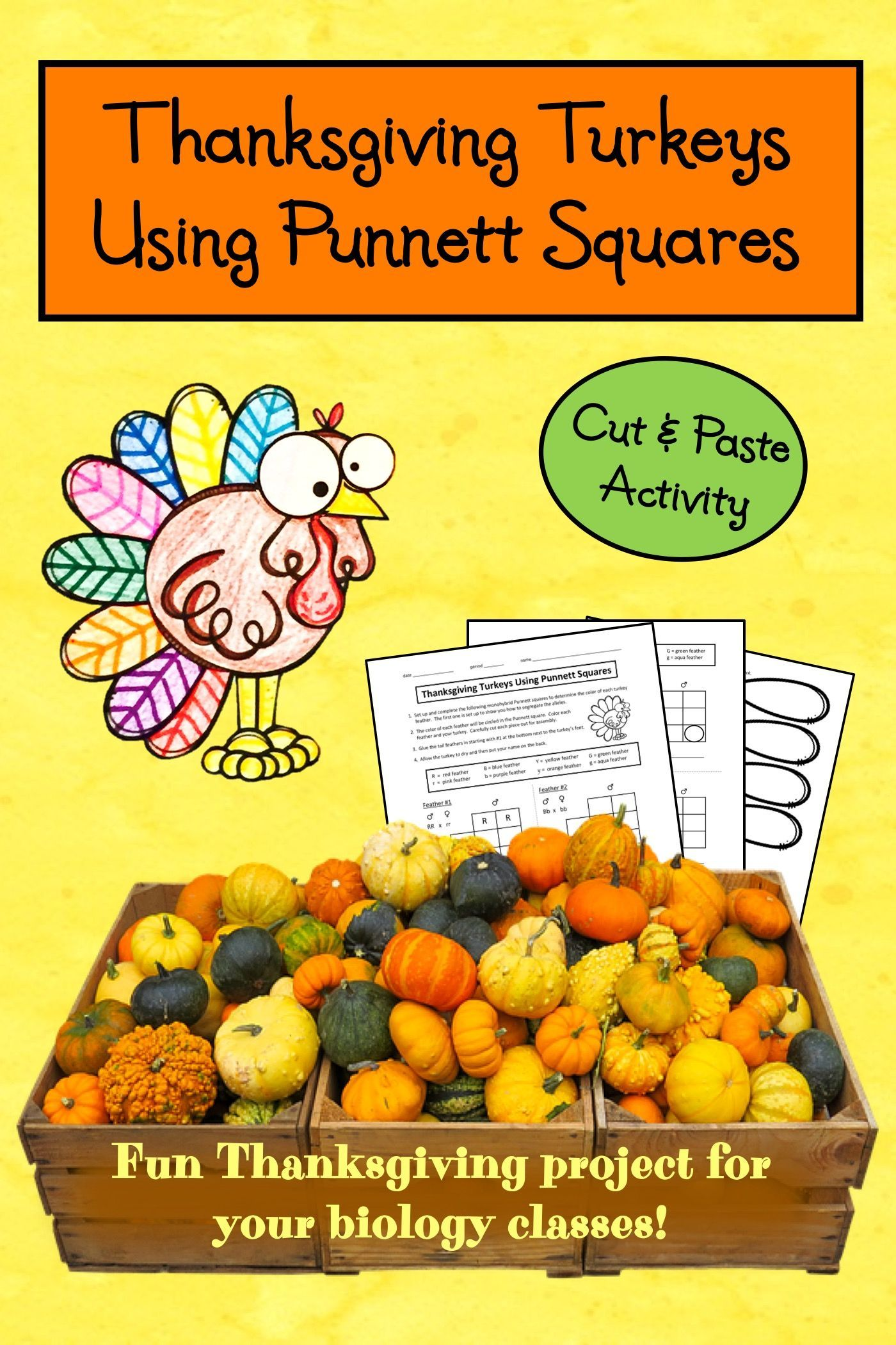 Thanksgiving Science Activity Using Punnett Squares To
