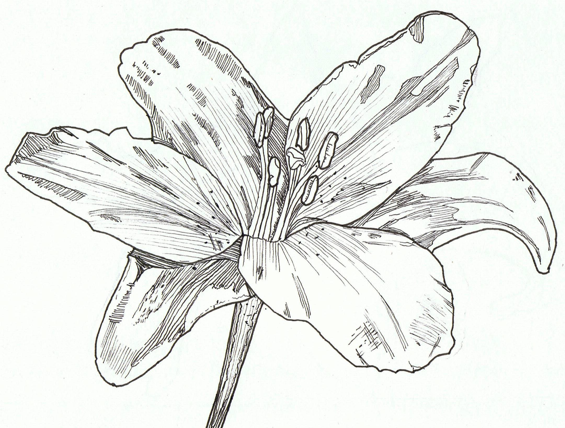 Lily, pen & ink art sketchbook in 2019 Art sketchbook