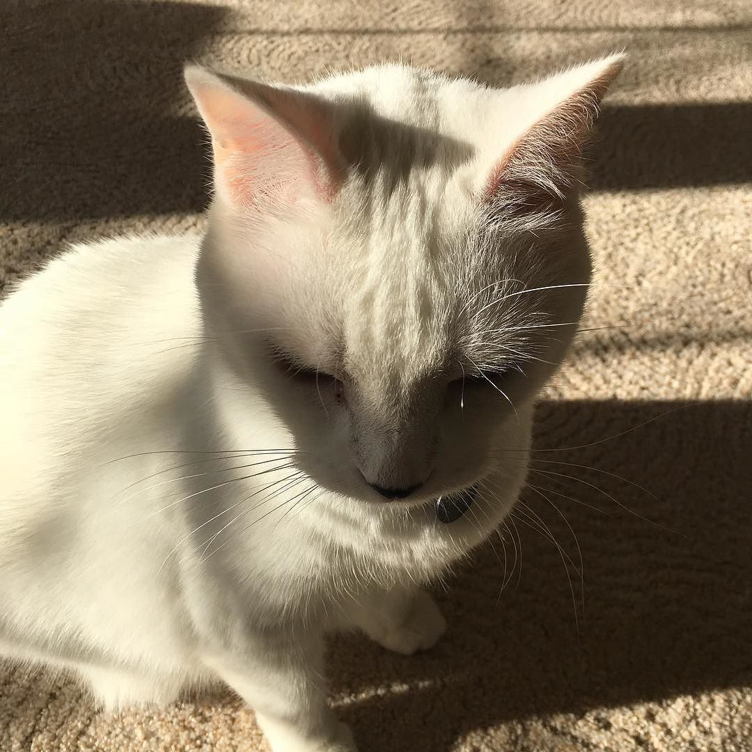 Cat is sitting in the sun I take heed the colors fall sunlight pattern touch the wall. #catportrait