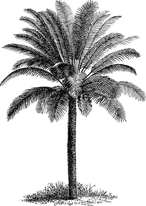 Pin by Doraliu on recipes to make   Palm tree art, Palm