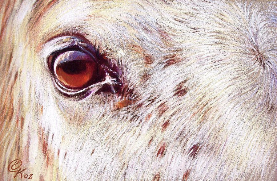 White Horse Pictures to Print | White Horse Close-up Drawing - White Horse Close-up Fine Art Print
