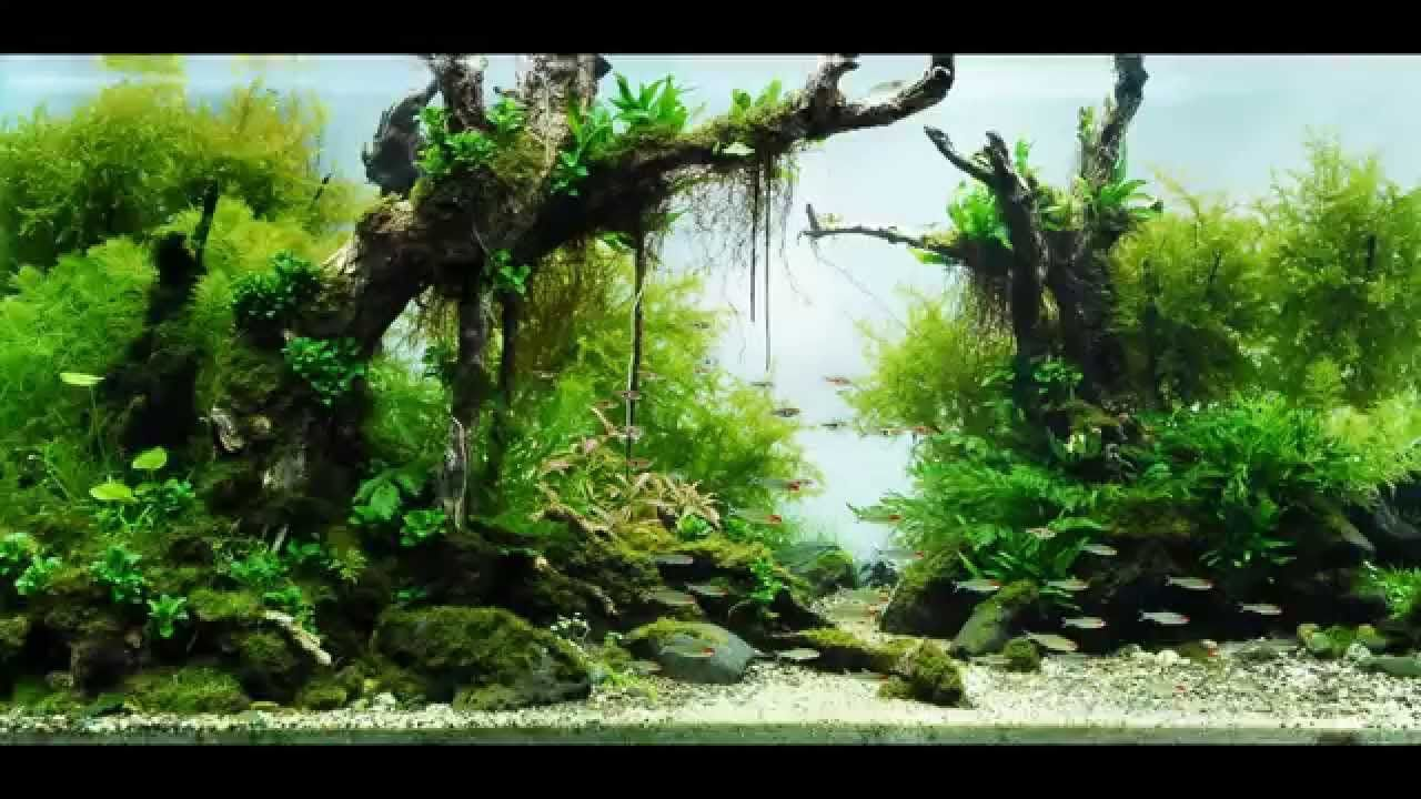 Most Beautiful Aquascapes - Fast-forward to 05:49 for ...