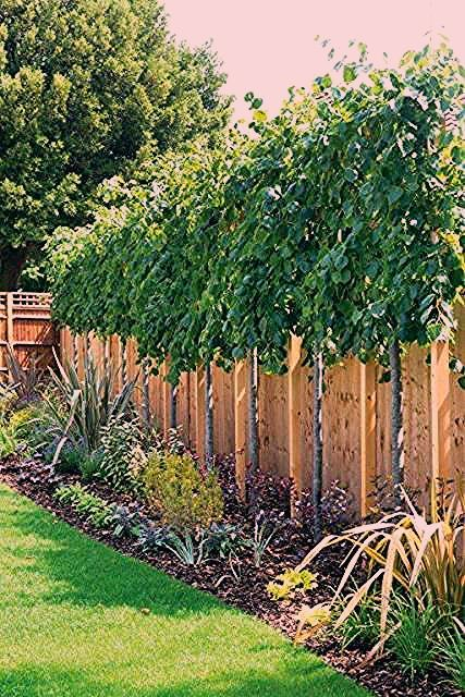 Photo of Great No Cost garden fence screening Tips