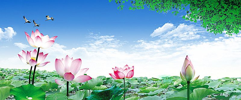 Nature Banner Background Background Background Images Natural Background