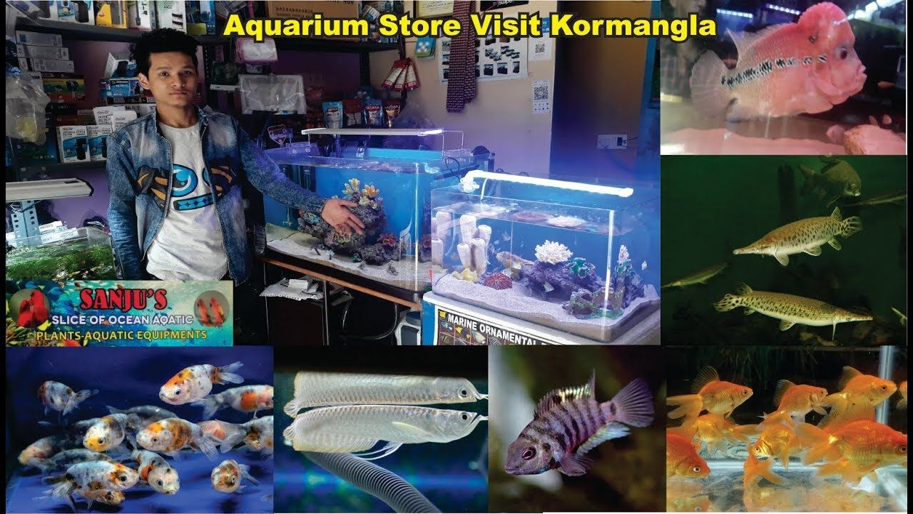 Aquarium Store Visit Koramangala Sanju Fish Store Banglaore India Aquarium Store Aquarium Visiting