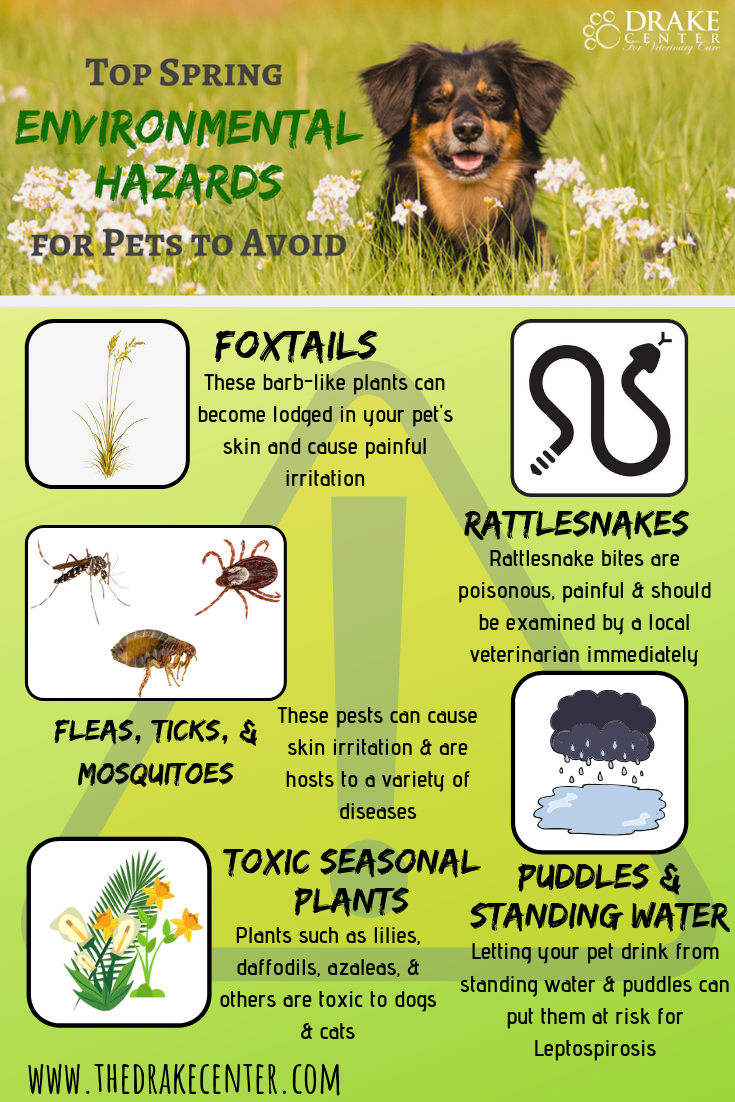 Top Spring Environmental Hazards For Pets To Avoid Pets Pet Safety Veterinary Care