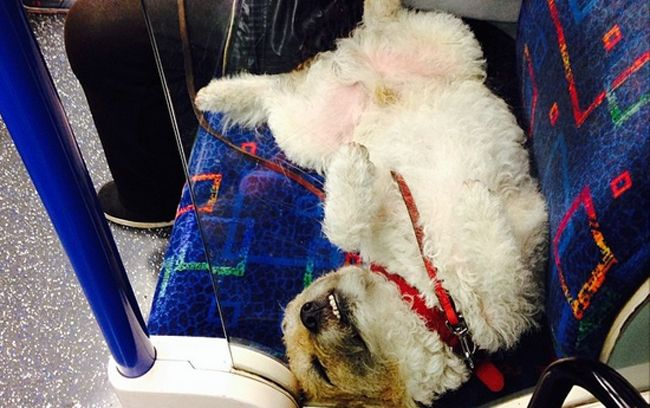 Mind The Yap 12 Dogs Riding The Tube Like It Ain T No Thang Dogs Animals Mindfulness