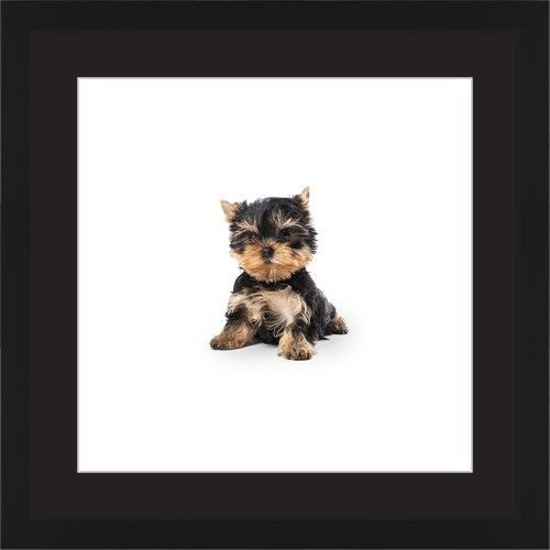 Terrier Puppy Framed Print, Black, Contemporary, Cream, Black, Single piece, 16 x 16 inches