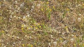Textures Texture seamless | Dry grass texture seamless 17328