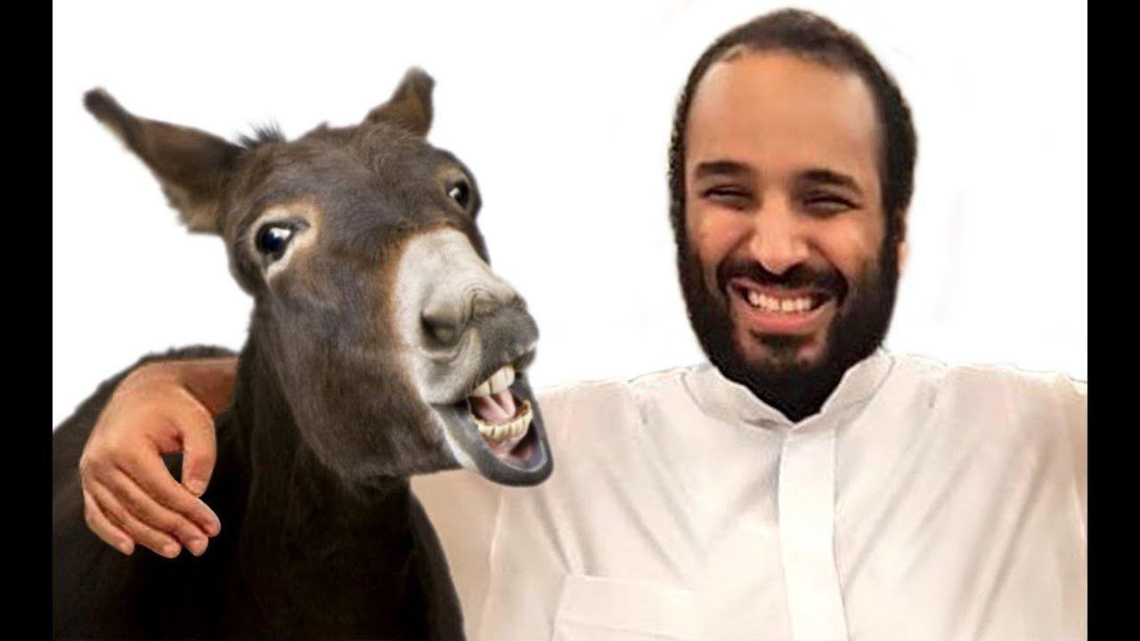غانم الدوسري يتصل بولي العهد السعودي الامير محمد بن سلمان Animals Goats