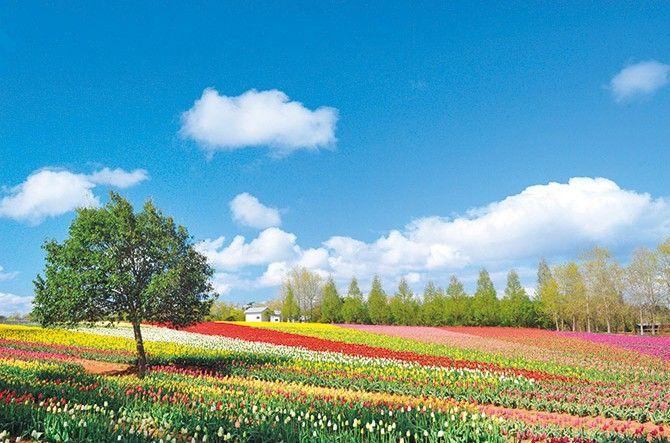 世羅高原農場 広島県世羅町 2017年gw ゴールデンウィーク に行きたい カラフルすぎる絶景スポット 関西 中国 四国 jalannet 風景 夏 風景 花畑