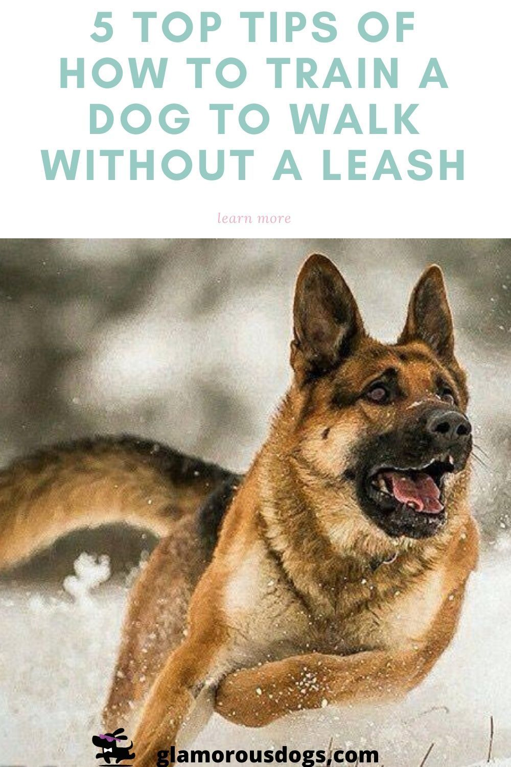 How to train a dog to walk without a leash top 5 tips in