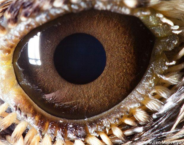 Fotografía. Los ojos del reino animal frente a un macro. by YWC magazine in fotografía // www.yeswecool.com