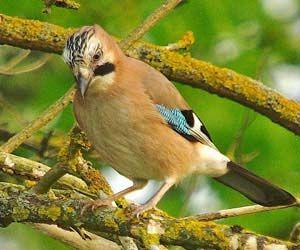 Identifier les oiseaux des jardins et des villes en hiver ...