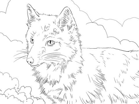 swift fox portrait coloring page  fox coloring page