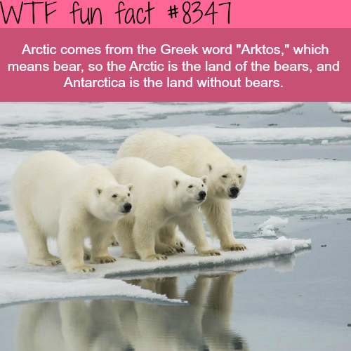 Amazing Funny: Arctic Bears - WTF Fun Facts
