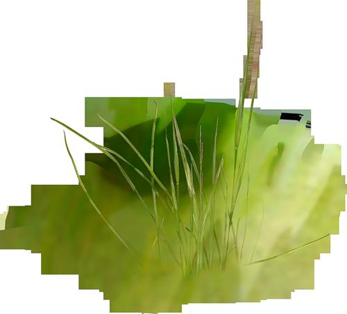 Skrap klipart nld grass on yandex blocos for Plants and grass