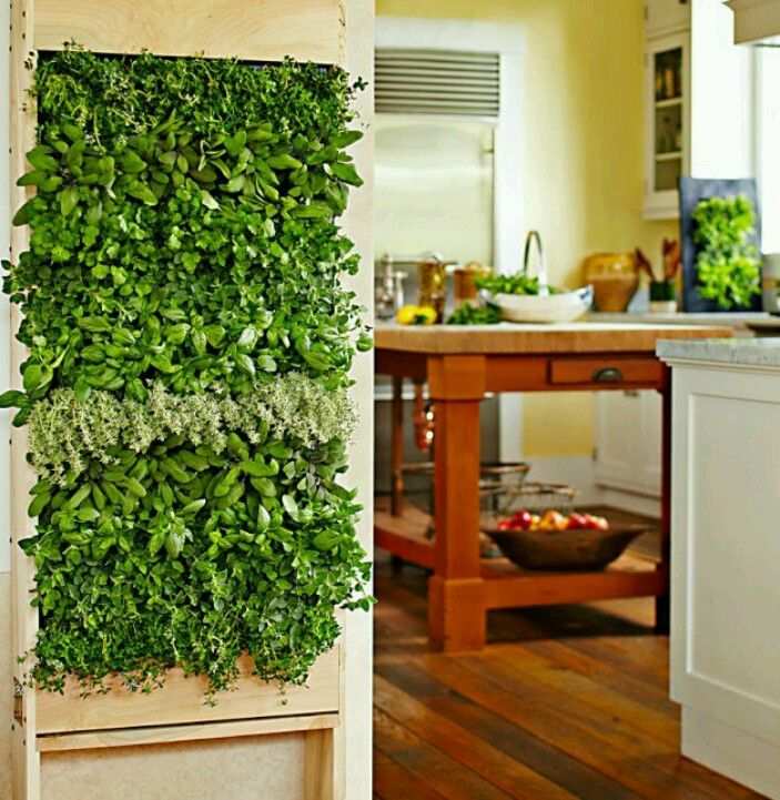 indoor herb wall awesome and kind of scary at the same. Black Bedroom Furniture Sets. Home Design Ideas