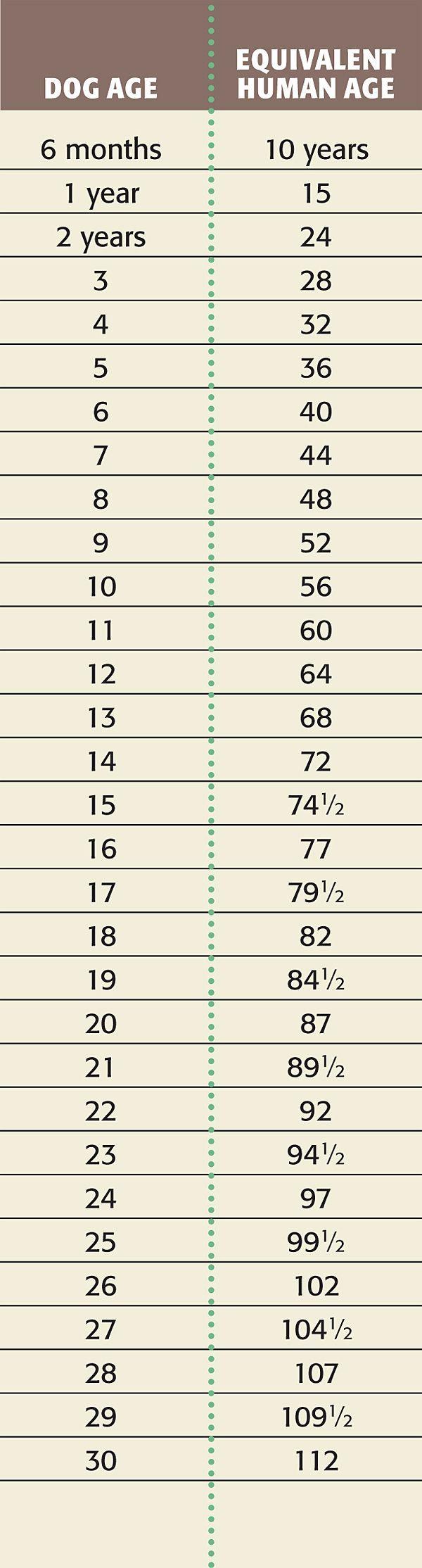 Dog Age Chart Dog Years to Human Years Dog years