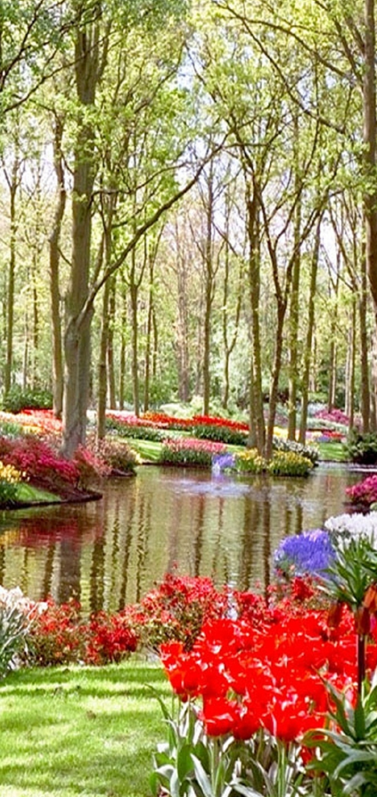 Keukenhof flower garden in lisse netherlands photo for Most beautiful garden flowers