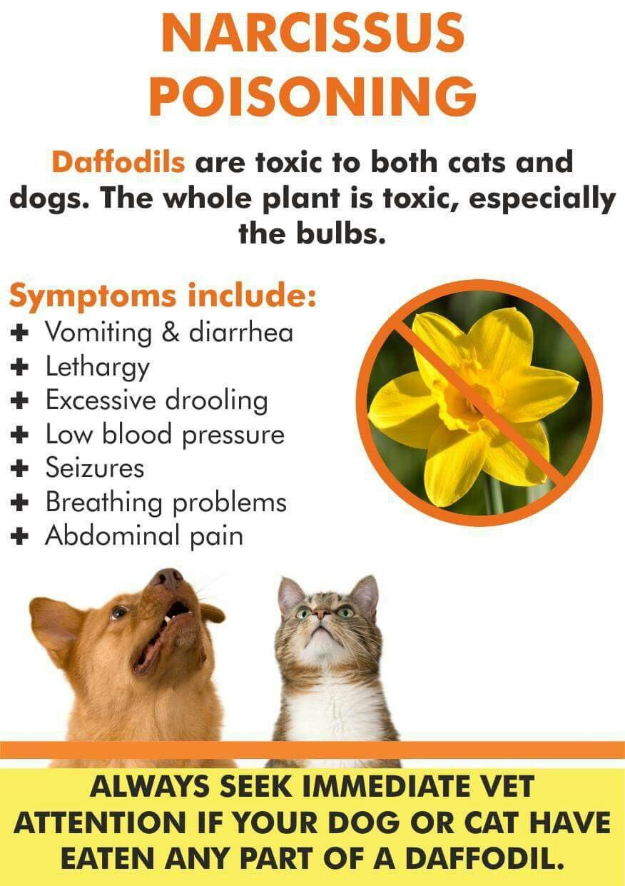 Pin By Carmen On Pet Care Info Pet Health Care Pet Safe