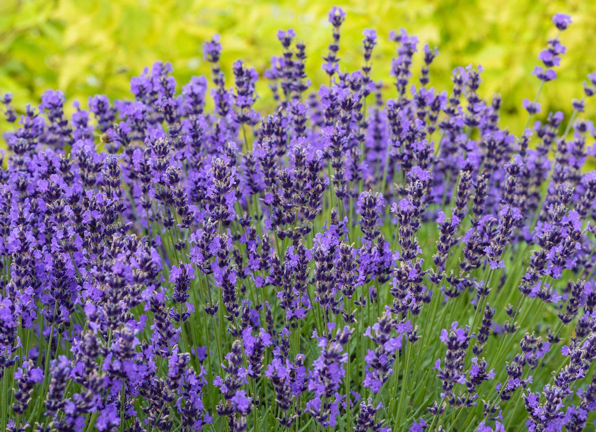 10 flowers that attract bees to your garden bee friendly plants