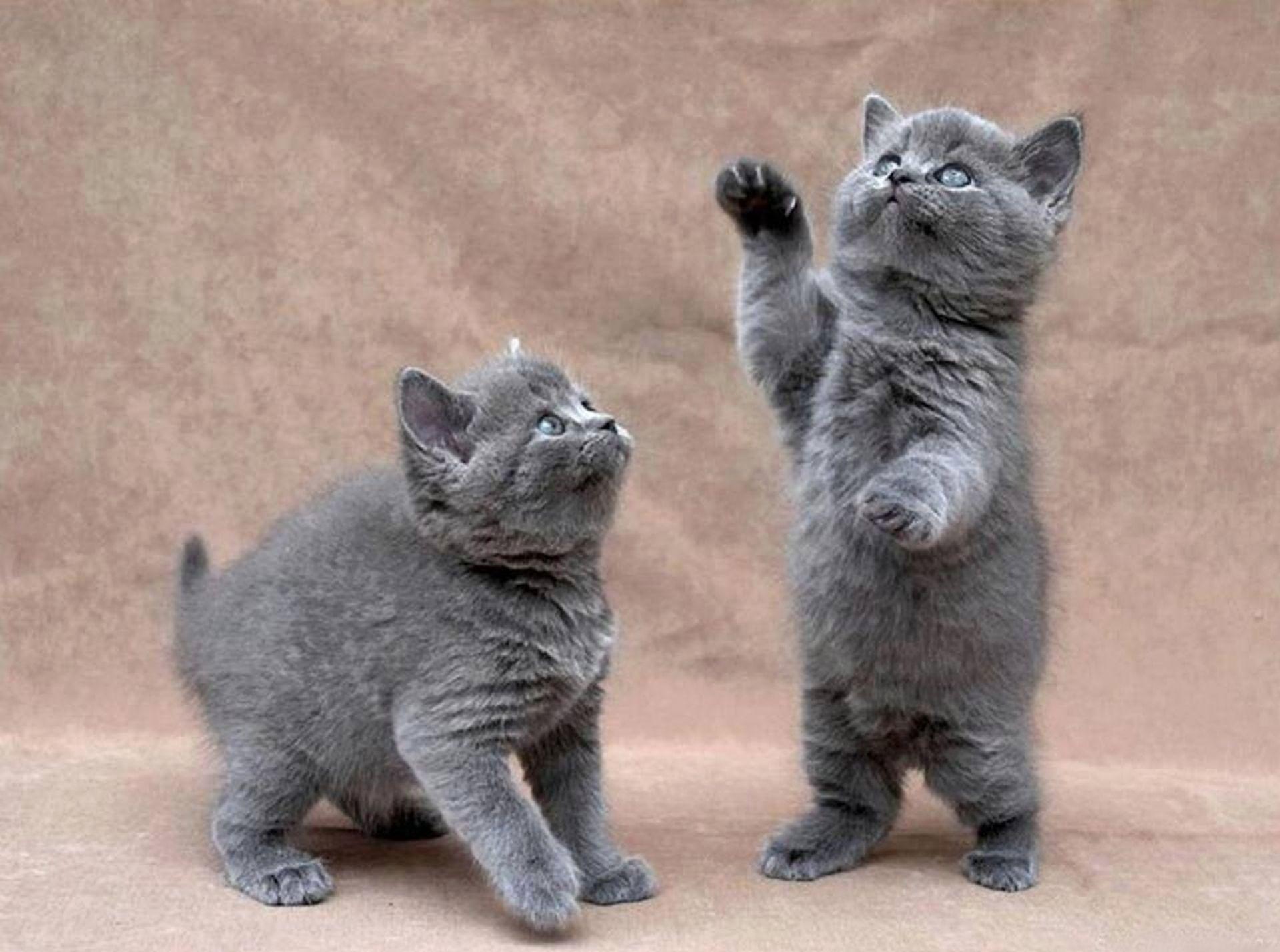 Картинки с разными кошками и надписями, мультяшные картинки