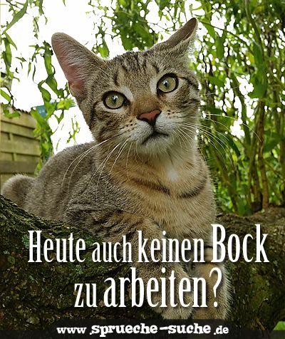 Heute auch keinen Bock zu arbeiten? | Sprüche | Funny cats, Cats