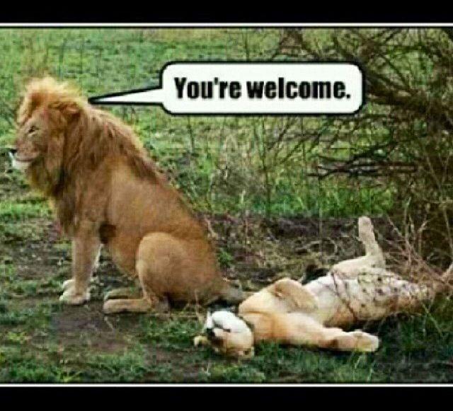 Lion/lioness