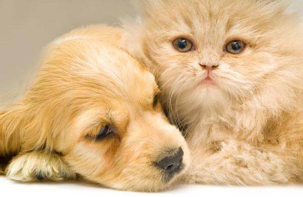 Treating Dog Allergies With Recommended Pet Meds Canine Allergy