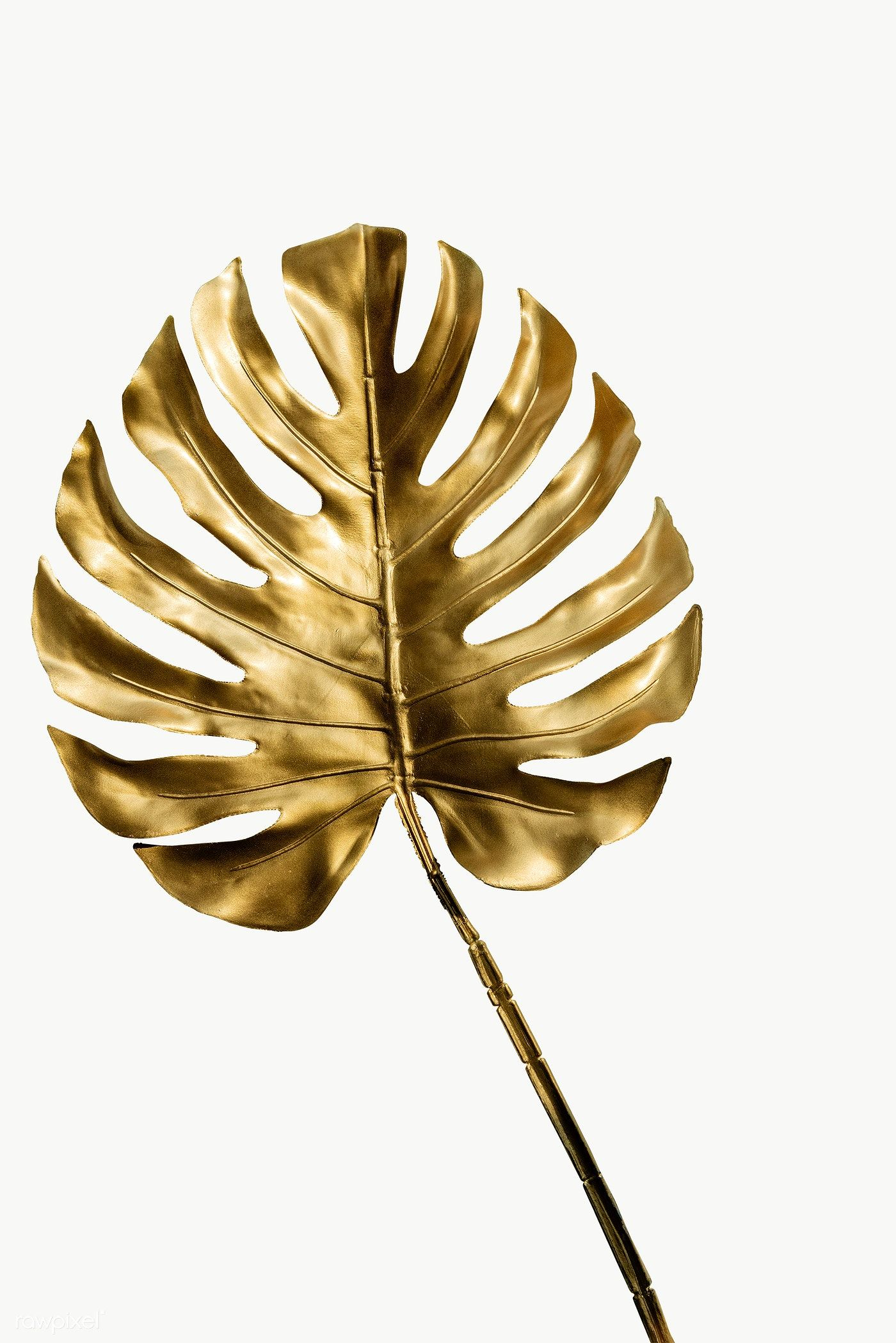 Shiny Golden Monstera Leaf Transparent Png Free Image By Rawpixel Com Teddy Rawpixel