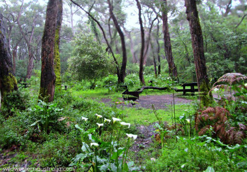 Boranup Campground In The Margaret River Region Camping Area Scenic Drive Australia Travel