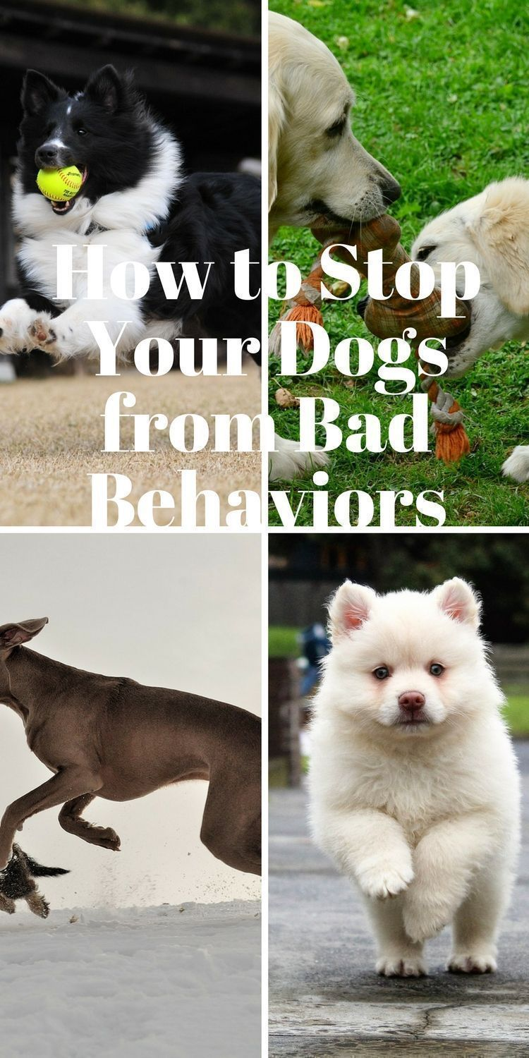 You can stop your dog from behaving badly .Discover how as