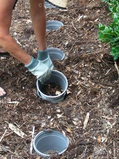 In an earlier Post we detailed the Pot-in-Pot method of growing annuals and perennials in sleeves in the ground. This makes gardening easier and more successful in many situations and should be tried by Florida gardeners throughout the state for many different reasons. We listed 20 reasons on this previous Pot-in-Pot post.