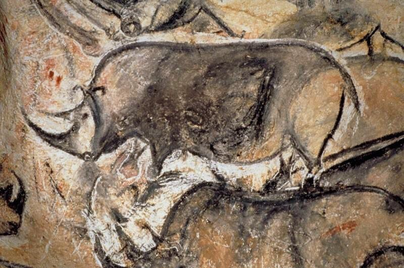 Chauvet Cave In Southern France Contains 60 Images Of The Woolly Rhinoceros They Are More Than 30 0 Cave Paintings Prehistoric Cave Paintings Prehistoric Art