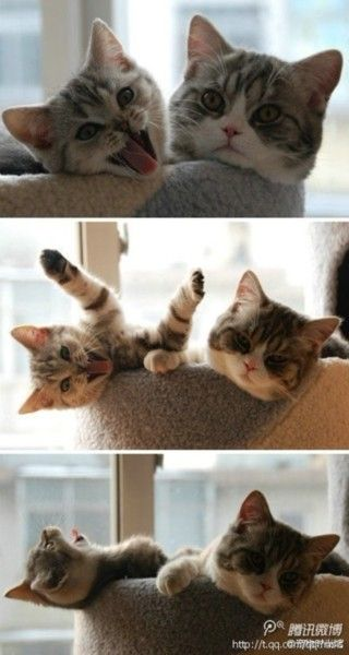 mochacafe: Silly Silly Kitty!!!!!!!    viaglossfixation