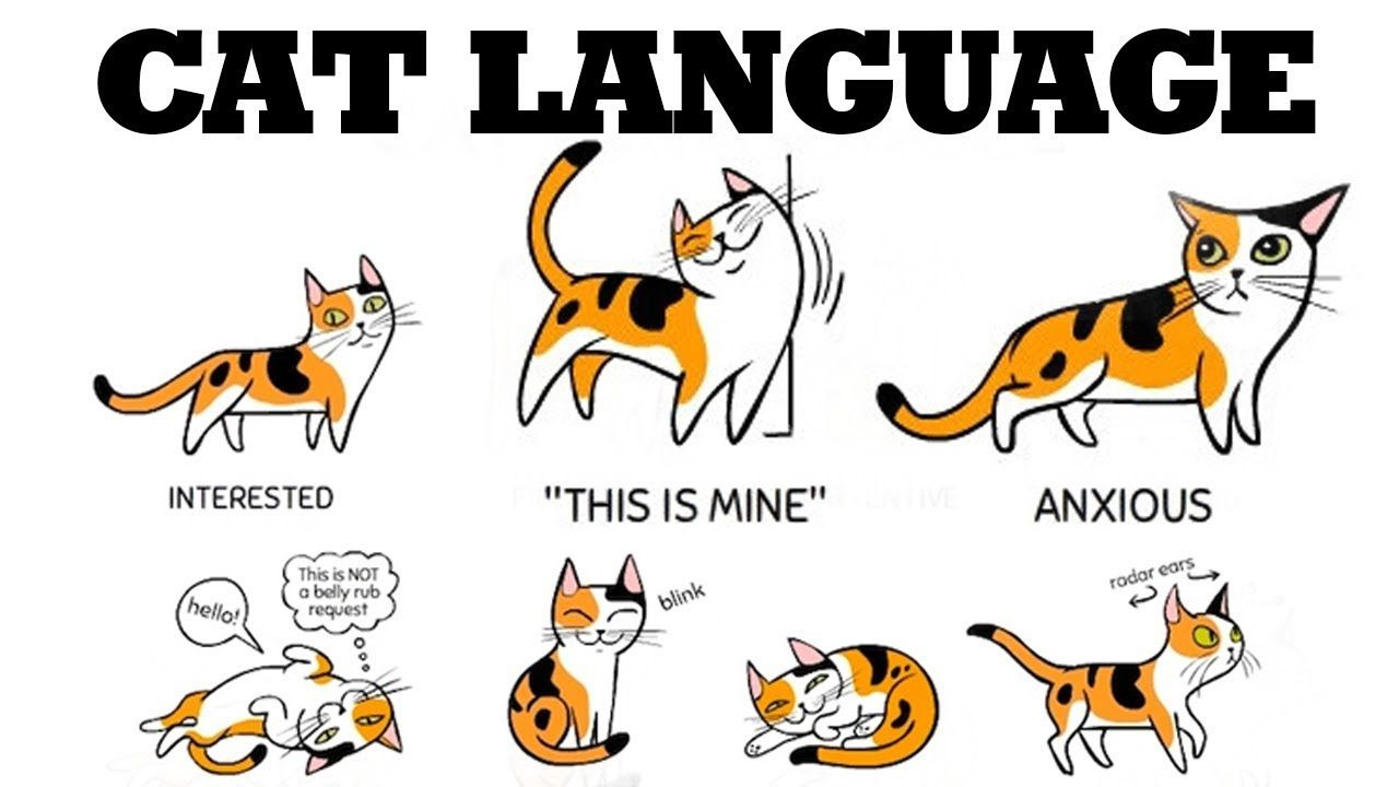 Top 10 Weird Cat Behaviors Explained Youtube Cat Behavior Crazy Cats Cat Language