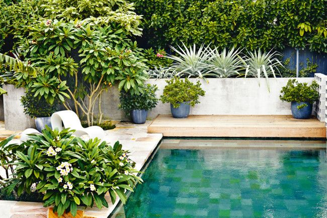Inviting Pool With Large Format Pool Tile Lush Plants In Pots Brought Right Into The Space