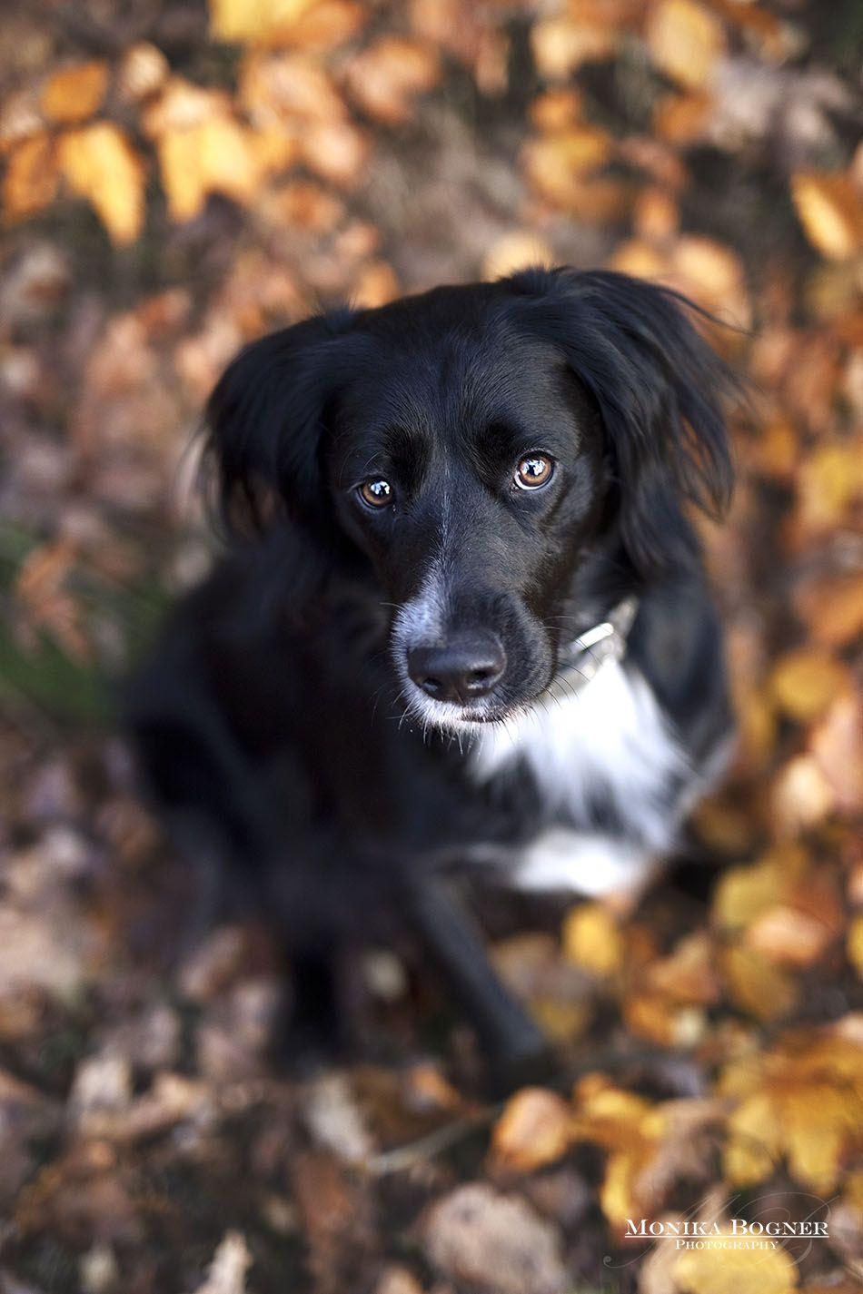 Hundeshooting Hunde Hunde Fotos Hundebilder