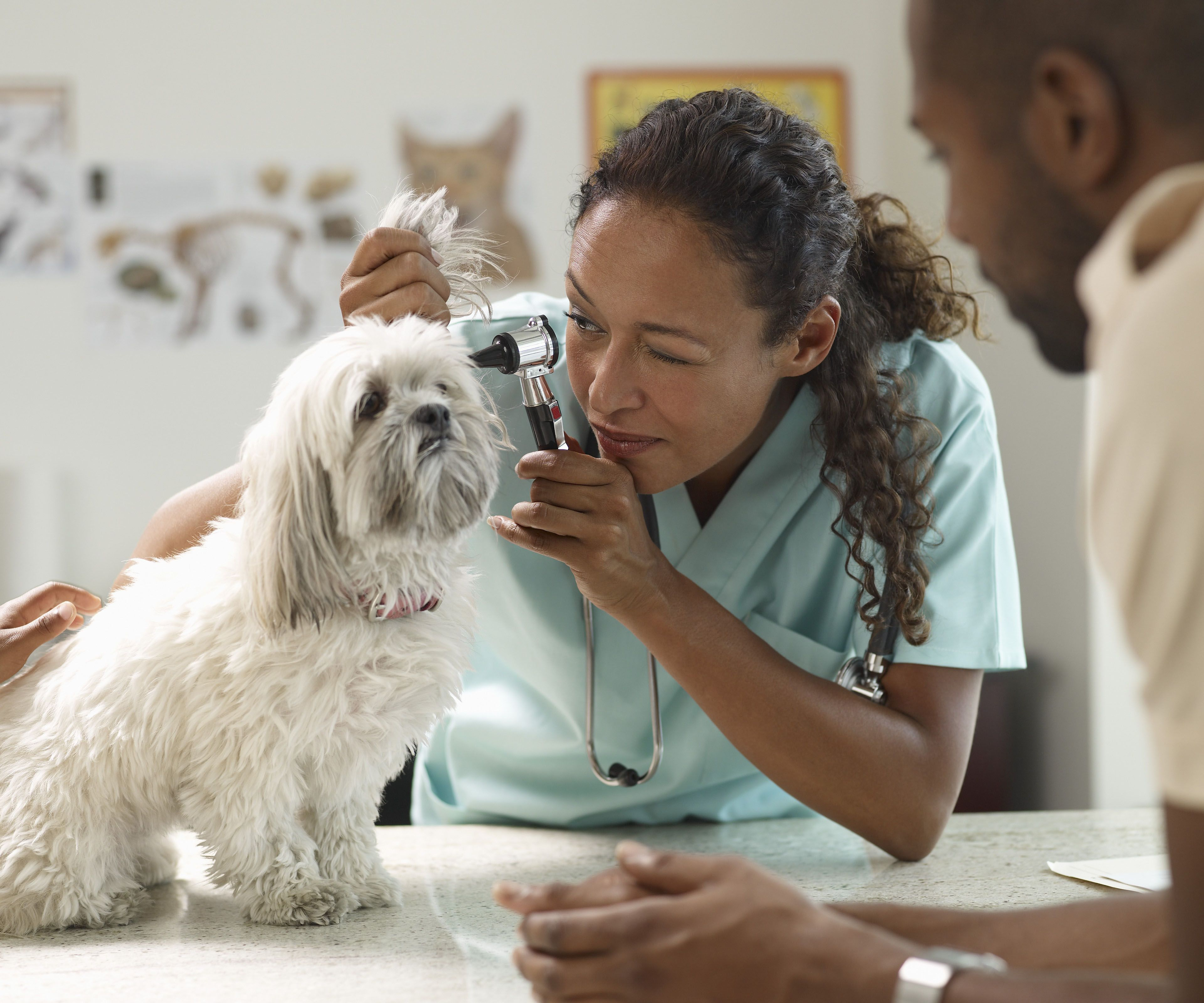 5 Ways Veterinary Technicians Can Help You and Your Pet