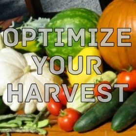 Outdoor and Gardening with Red Hill: 10 Ways to Maximize your Garden's Harvest