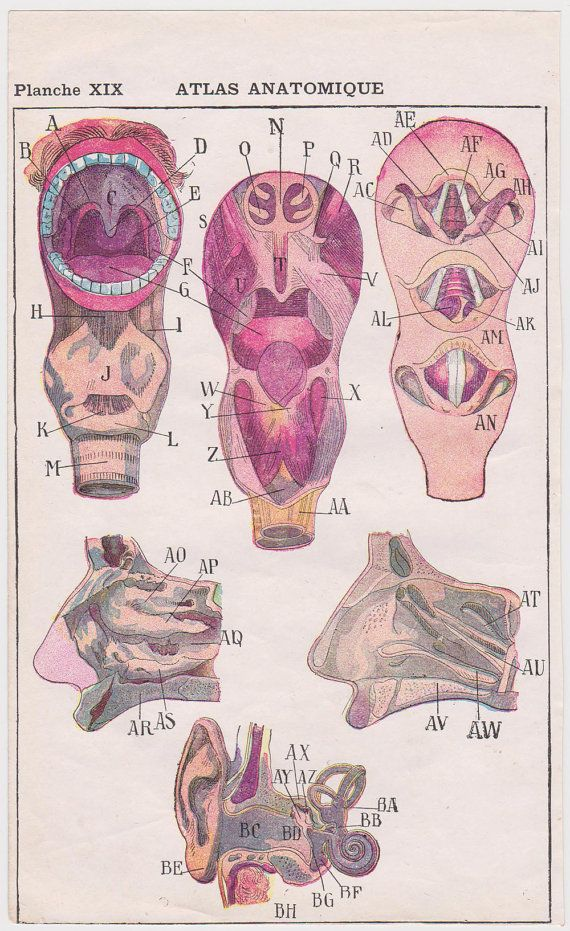 Vintage anatomy prints a 1907 FRENCH color bookplate, ear, nose ...