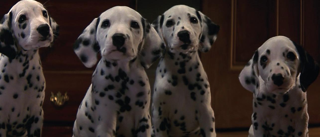 Dalmatian Puppies 1996 101 Dalmatians Pinterest