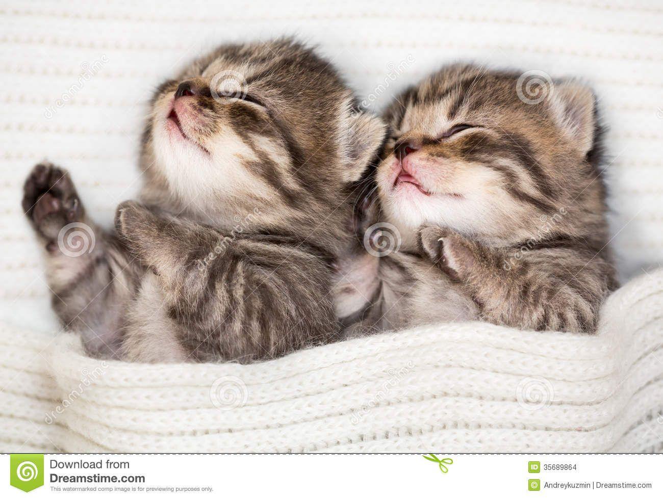 Cute Baby Kittens Sleeping Two Sleeping Baby Kitten Lying