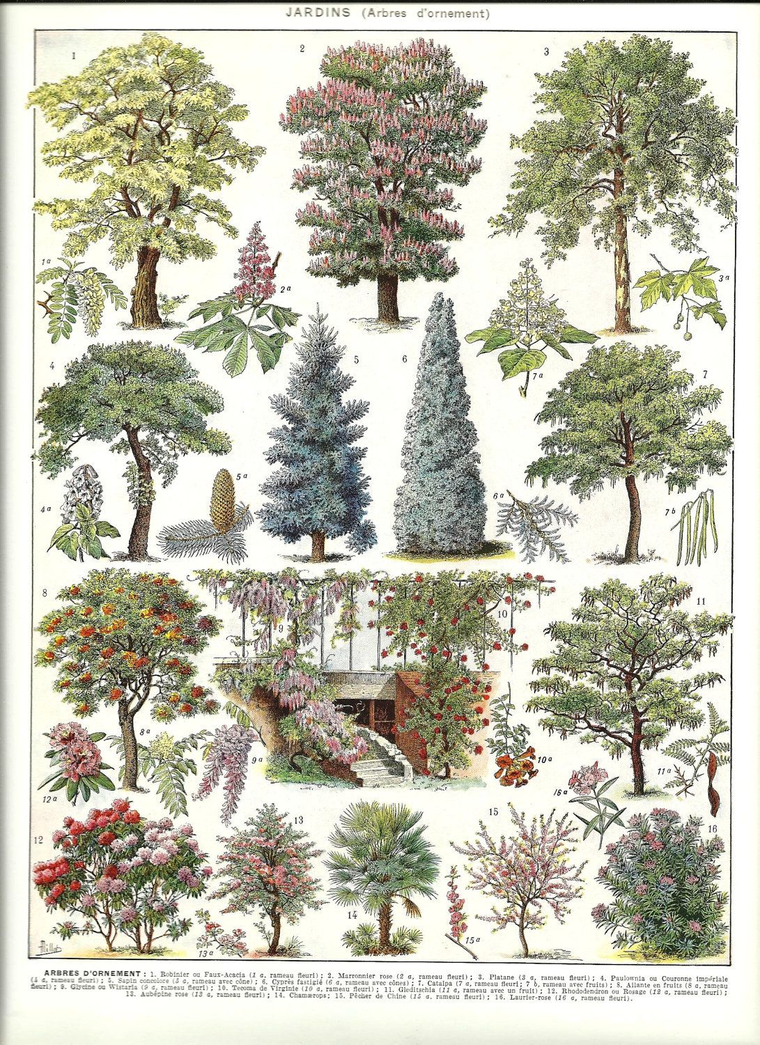 Ornamental trees designillustration pinterest botanical art