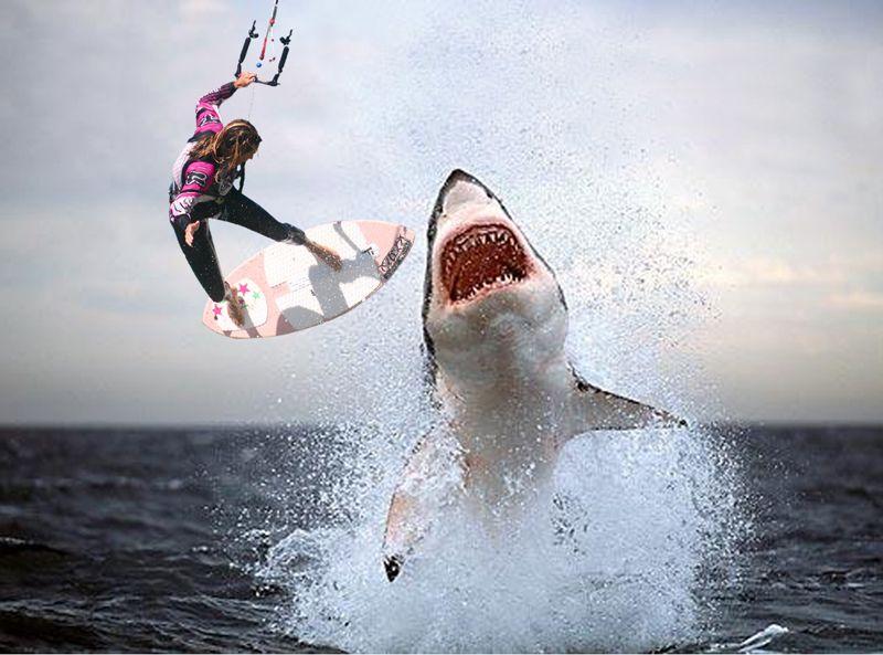 Great White Shark | Waterr | Pinterest | Shark